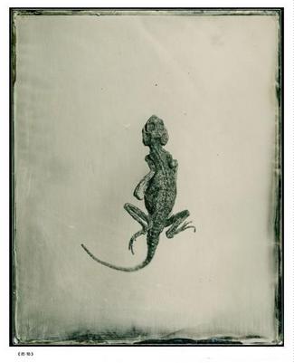 《药物》 蜥蜴
