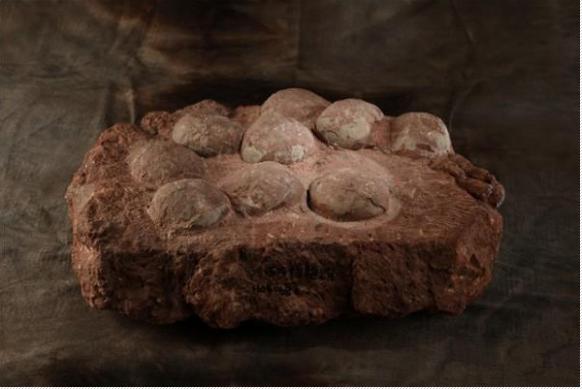 晚白垩纪圆形恐龙蛋化石