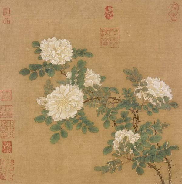 南宋 马远 《白蔷薇图页》