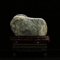 菊花石004