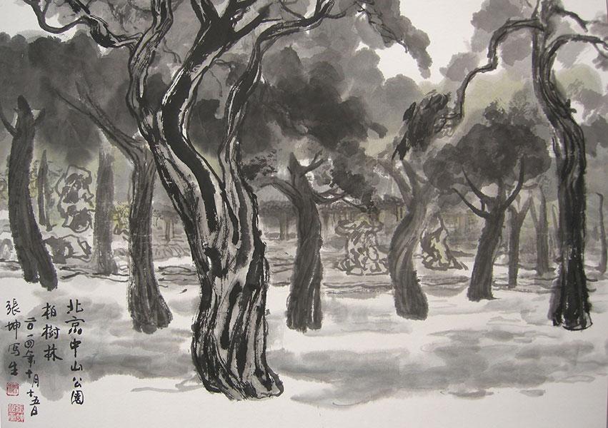 北京中山公园柏树林